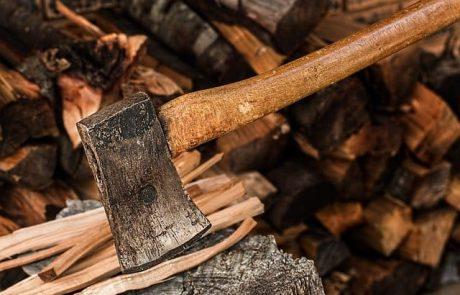 כריתת עצים – מדוע זה הכרחי