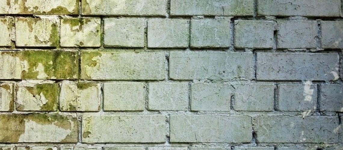 עובש בקירות?