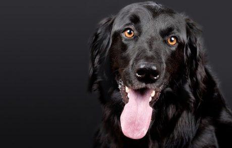 8 סיבות אפשריות שהכלב שלכם לא אוכל