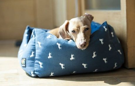 מיטות לכלבים – לשם מה זה טוב?