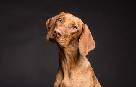 פרו פלאן – מזון איכותי לכלבים מותאם אישית