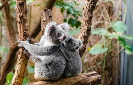איפה אפשר לראות את כל החיות המתוקות בעולם?