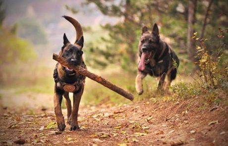 משחקי כלבים – למה חשוב לשחק איתו