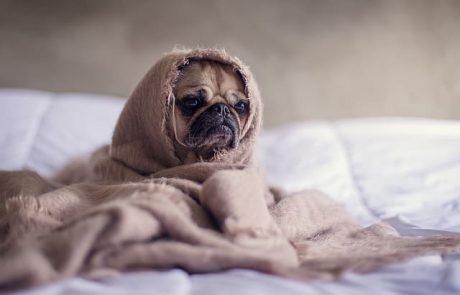 מחיר הדברת פשפשים – כמה עולה להדביר את פשפש המיטה?
