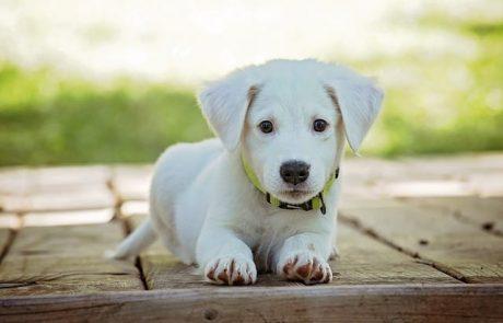 3  טיפים לבחירת מזון יבש לגורי כלבים