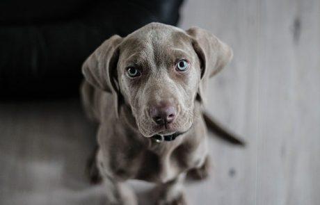 שימורים לכלבים חזקים ושמורים