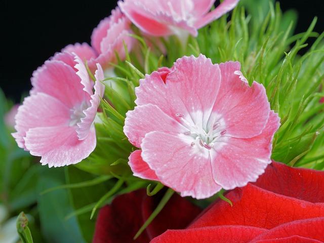 משלוחי פרחים במרכז- לעשות את זה בצורה חכמה