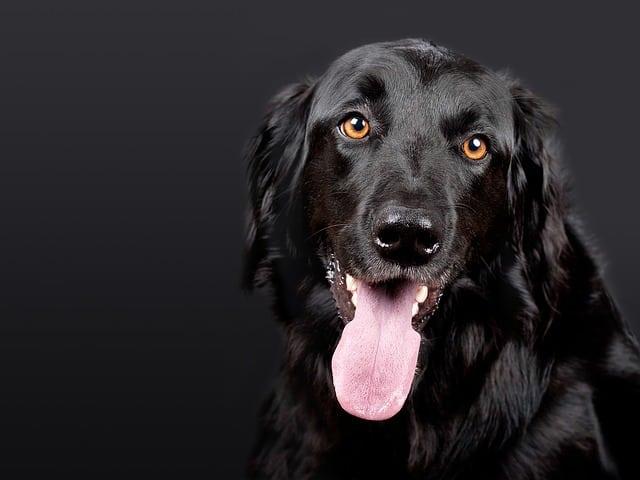 למה חשוב לעשות חיסונים לכלבים שלכם?