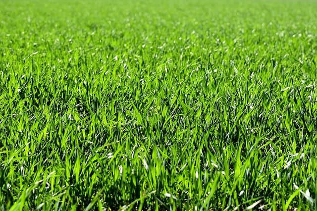 סוגי דשא סינטטי