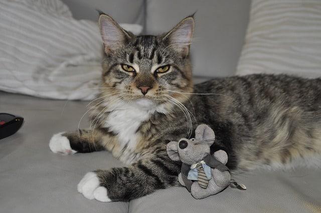 צעצועים שכל חתול חייב בבית!