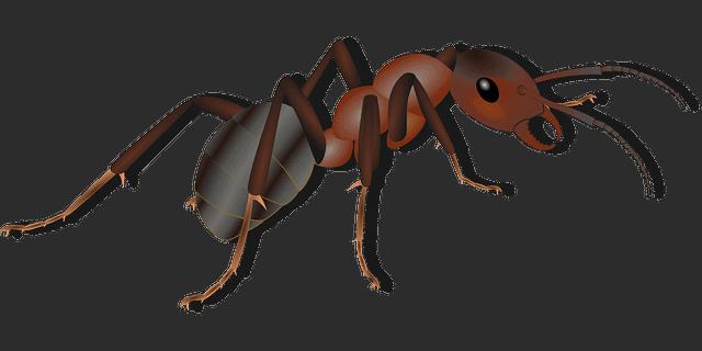 חברה להדברת נמלים – להיפטר מהנמלים בקלות וביעילות