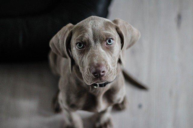מאמצים חבר חדש: ציוד בסיסי שכל בעל כלב צריך