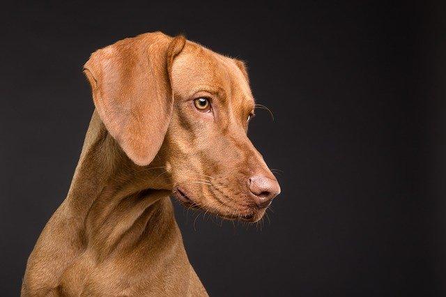 אוכל לכלבים – חשוב לבחור באוכל איכותי